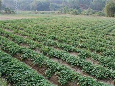红薯西甲ballbet贝博应用(图1)